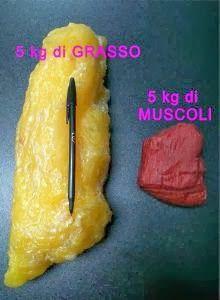 http://vanessafitmom.blogspot.it/2014/01/muscolo-vs-grasso-muscle-vs-fat.html?m=1