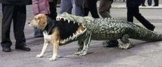 If I had a dog, this would definitely be it's Halloween costume!!