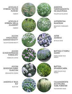 Favorites                                                                                           More Back Gardens, Outdoor Gardens, Australian Native Garden, Cottage Garden Plants, Planting Plan, Drought Tolerant Plants, Garden Borders, Plantation, Plant Design