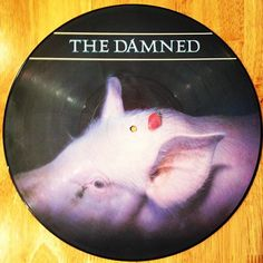 @damnedtwits @rebellionpunkfestival  this year strawberries #picturedisc from #1986 #thedamned great #album #punk #punkrock #goth #vinyl #vinylcollection #vinylcollector #vinylpunk @punkrock_vinyl @punkoihardcore @punk_and_oi_archive @punk.and.metal @punkicons @punks_and_skins_unite @punk