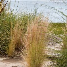 Blowing in the Wind - Rooted in the Landscape - Coastal Living