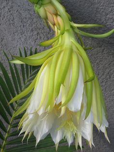 Pitaya flower / Dragon Fruit Pitaya, Slow Travel, Agriculture, Dragon, Fruit, Flowers, Gardens, Sustainable Tourism, Tropical Garden