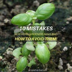 Hydroponic Gardening Ideas 10 Mistakes New Herb Gardeners Make And How to Avoid Them! - I Love Herbalism - Master these simple and practical tips for herb gardening and you'll be using your own fresh herbs like Mario Batali in no time. Organic Gardening, Herbs, Home Vegetable Garden, Gardening For Beginners, Herb Garden, Hydroponic Gardening, Types Of Herbs, Garden Pests, Gardening Tips