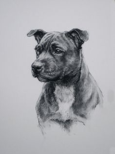 Staffy I, limited edition print of my original charcoal sketch. This is a small run of 100 prints, each are individually signed, numbered and dated at