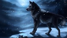 """We are wolves. Its our nature to stand up for what we believe. No one changes that."""