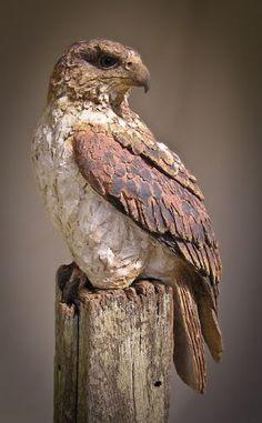 Ferruginous Hawk Full Length Site has a number of other bird sculptures Clay Birds, Ceramic Birds, Ceramic Animals, Ceramic Pottery, Ceramic Art, Sculptures Céramiques, Art Sculpture, Tree Carving, Ceramic Figures