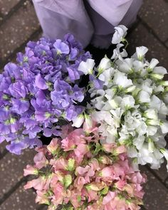 Sweet pea bunches ☎️💜💕😚 #sendinglovehome #florist #chislehurst #bunches #flowergirl #sweetpea #pastel #flowerdelivery 💟 Flower Delivery, Cabbage, Floral Wreath, Pastel, Wreaths, Vegetables, Sweet, Plants, Instagram