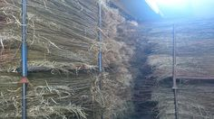 Dry willow being stored for sorting 2015