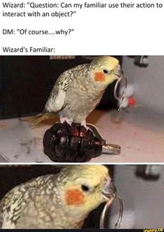 """Bildmemes - iFunny Assistant: """"Question: Can my acquaintance know their . - Photo Memes – iFunny Assistant: """"Question: Can my friend use their action to interact - Dungeons And Dragons Memes, Dungeons And Dragons Homebrew, Dnd Dragons, Humor Mexicano, Dnd Funny, Dragon Memes, Nerd, Dnd Characters, Gaming Memes"""