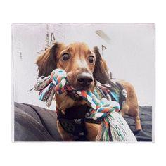 Pet Throw Blanket on CafePress.com