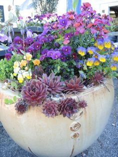 After a long cold winter, gardeners are itching to get some color outside, even as early as St Patrick's Day. Most hardy annuals tolerate light frosts, but not freezing. St Patrick's D… Container Flowers, Container Plants, Container Gardening, Yellow Twig Dogwood, Ornamental Cabbage, Oriental Lily, Cold Frame, Hens And Chicks, Spring Garden