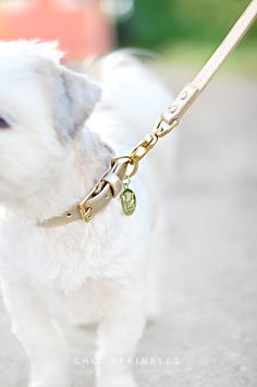 Trip to #charleston / Coco Bean in her Woof New York collar + Leash / © Chic Sprinkles