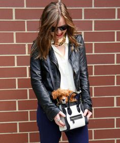Oh, man... puppy in a Céline bag. Too much to handle