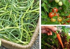 The 16 Best Edible Plants to Grow Indoors.... lots of growing info and tips... like put stones in the bottom of a pot without drainage:)
