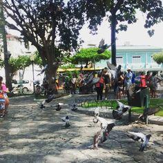 """El Parque Seminario o conocido como """"De las Iguanas"""" en Guayaquil, Ecuador"""