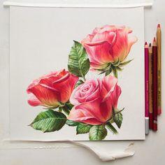 Pretty roses #pastelpencils #Pastelmat 25x25 cm. For sale. Розы. Пастель 25х25 см. Цена 3000 р. Как думаете, фон нужен?