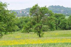 Typisch Bliesgau: Streuobstwiesen, Buchenwälder und Auenlandschaft