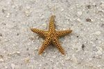 The Starfish Story is a tale that shows how helping each and every person can be so helpful even when the task of helping so many seems so daunting.