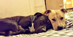 2/14/16 STILL THERE!!! Rocky & Bruiser click on link in article to see info. and more adoptables.