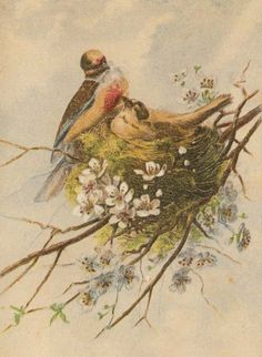 victorian birds | Antique Painting of Two Spring Birds in a Nest with Flowers @ Vintage ...