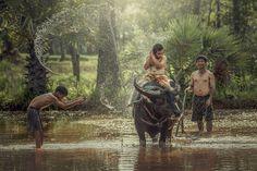 Photo Happy boy riding water buffalo. by Jakkree Thampitakkul on 500px