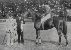 Persimmon (1893 colt by St. Simon out of Perdita II, by Hampton), bred and raced by Edward, Prince of Wales, later King Edward VII. Winner of 7 of 9 starts, including the 1896 Derby at Epsom, as well as the St Leger. He died in 1908 after a successful stud career which included siring the top race mare Sceptre. As was traditional in his time for honored or beloved animals, his head was stuffed after his death, and remains on display in Newmarket's Racing Museum, along with his sire's hoof.