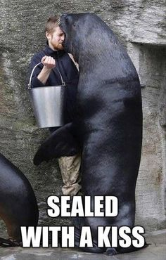 Funny Pictures Of The Day – 89 Pics Sealed with a kiss #seal