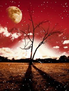 Ngắm nhìn bầu trời màu đỏ ối, cây khô in bóng đen trải dài cô đơn và quạnh vắng với tải hình nền động – Hoàng hôn đỏ nhé!