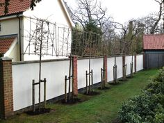 Instant Hedges - Suppliers and Growers of Semi-Mature and Mature Trees, Shrubs and Instant Hedge