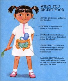 A very simple explanation of how digestion works.