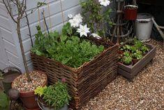 Pots, baskets, fruit crates!