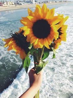 Beautiful little sunflower bouquet - - Sonnenblumen - Flowers My Flower, Beautiful Flowers, Happy Flowers, Beautiful Images, Beach Flowers, Unique Flowers, Beautiful Gifts, Flower Beds, Beautiful Things