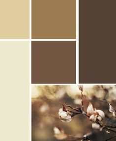 brown color scheme for a living room!