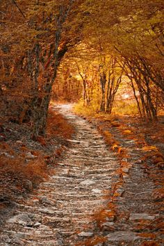 Autumn Path. One of those paths you half expect an elf to come walking by on. :]