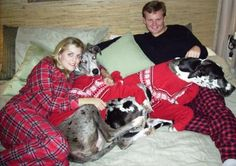 All Snug in Their Bed- heck yes with great Danes!