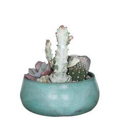 Oasis Ceramic Pot, Matte Turquoise, Planted with Cacti and Succulents