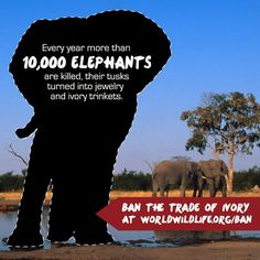 Urge Thailand to Ban the Trade of Ivory:  https://support.worldwildlife.org/site/Advocacy?cmd=display=UserAction=677