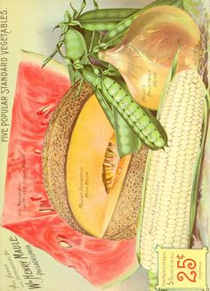 Maule's seed catalogue : 1901