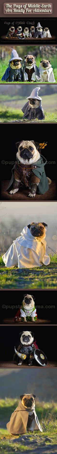 Pugs of Middle Earth.
