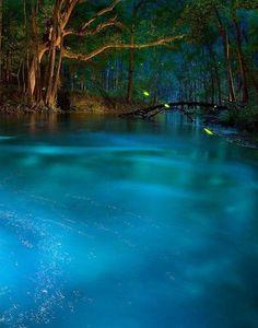 Ichetucknee Springs State Park  FLORIDA USA