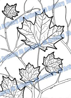 Coloring Page Maple Leaf by JBArtistryShop on Etsy