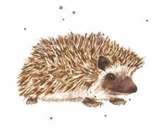 """Prickly Paul - """"Eastwitching"""" whimsical watercolour animals by Welsh artist - Alison Fennell"""