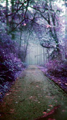 The Fertile Forest Of Our Imagination  Source Flickr.com