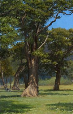 Takuma Kaneko,  A Tree,  Oil on Canvas  18 x 22 inches