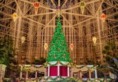 Make Holiday Plans Now for Gaylord Palms ICE! and More