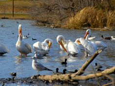 White Rock Lake, Dallas, Texas