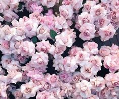 Image about pretty in flowers 🌸💗🌷 by 💗𝘱𝘪𝘯𝘬 𝘱𝘳𝘪𝘯𝘤𝘦𝘴𝘴💗 Flowers Nature, Pretty In Pink, Beautiful Flowers, Pink Roses, Pink Flowers, Keepsake The Label, Pink Aesthetic, Aesthetic Images, Long Weekend