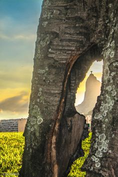 The Christ Inside The Tree by Ruy Barros on 500px