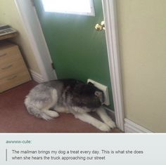 And this is why dogs are great. #imgur