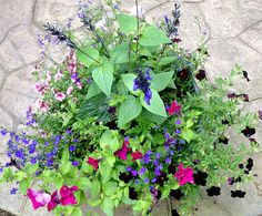 favorite annual flowers for container gardening, container gardening, flowers, gardening